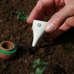 Guerilla Gardening Starbucks Style3