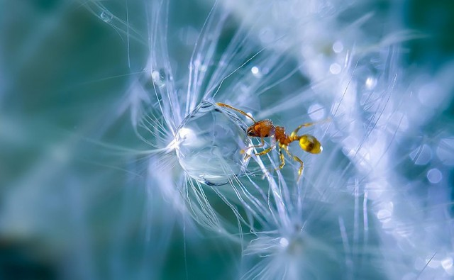 Macro-Photography-by-Milki-Asai12-640x395