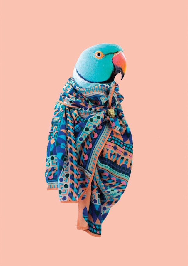 Scarf Collection By Natasha Coverdale