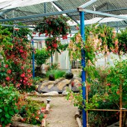 The Fuchsia-Nursery Guttmann close to Vienna is worth a travel by all means