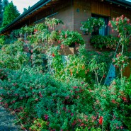 Im Garten von Heinz Sommerhalder