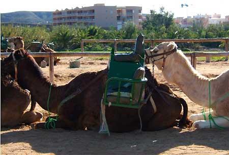 kamelsafari