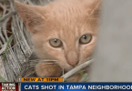 Kittens shot in Tampa Florida