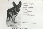 New Jersey Pizzeria is Putting Flyers of Missing Pets on Pizza Boxes