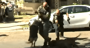 Anaheim Police K-9 Attacked by Pit Bull