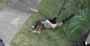 Signal Hill K9 Take Down