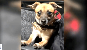 Service Dog Stolen From Disabled Veteran with PTSD
