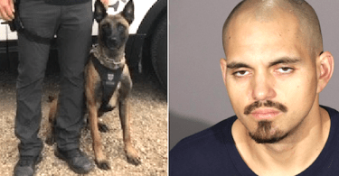 Rodrigo Calderon and Glendale Police Department K-9 Coda are seen in photos released by the Police Department on Aug. 27, 2021.