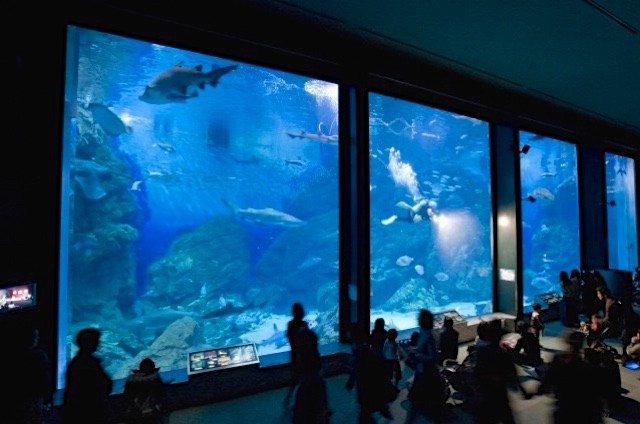 marine world night aquarium