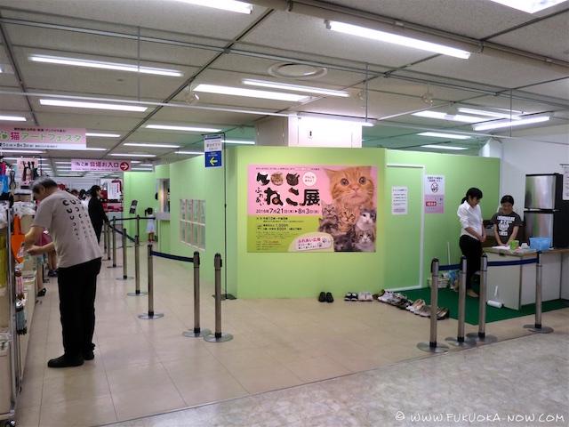 Cat Fair 2016 002