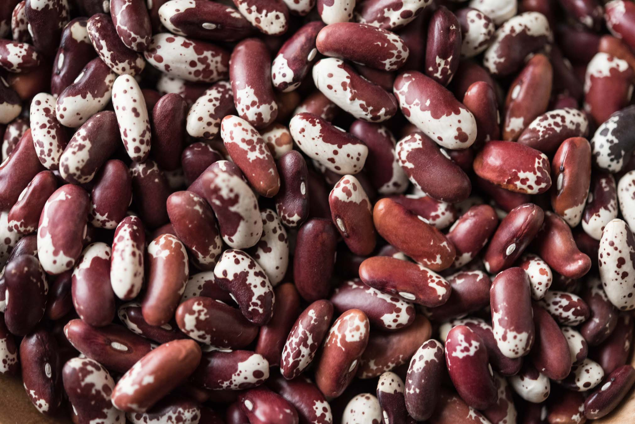 heirloom cattle beans