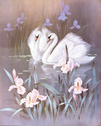 Swans With Waterlilies Fine Art Print By TC Chiu At