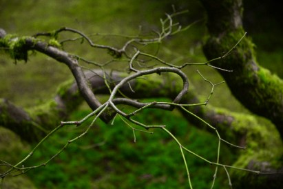 Cirlce Branch by Scott Nelson