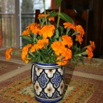 Marigolds from the garden