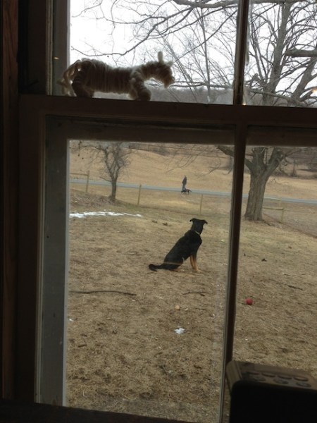 Frieda watching Jon and Lenore walk by
