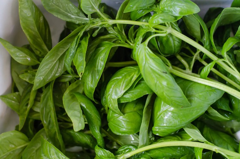 Fresh basil from the farm just down the street!