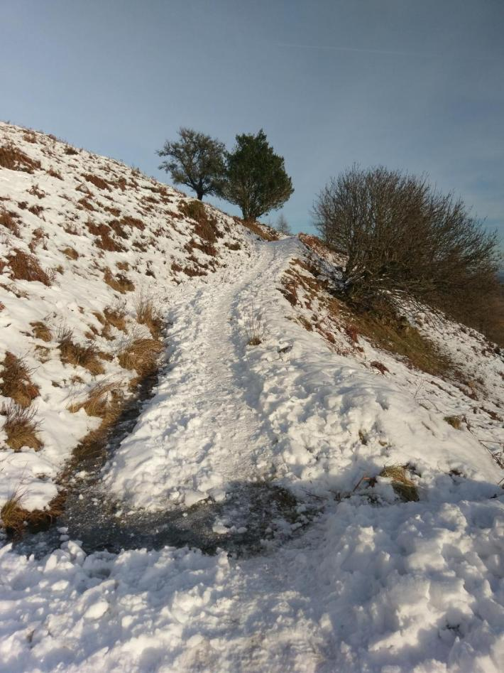 A snowy hillside trail with trees