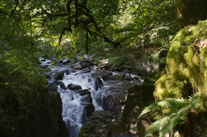 The Hermitage, Waterfalls in Scotland. Foreground: Moss covered rocks with sunlight. Over hanging trees. Water flowing over the rocks in the background