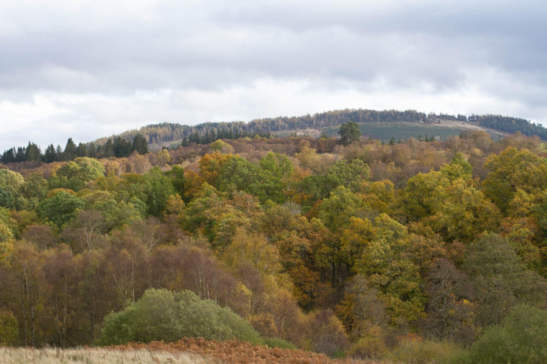 Perthshire woodland