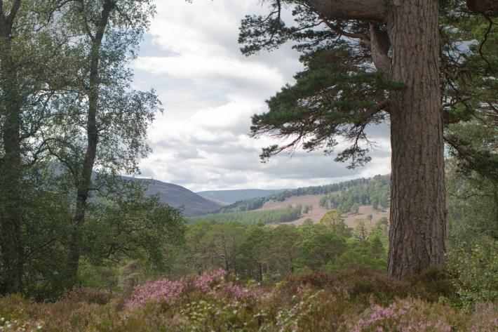 Mar Lodge Estate, Caringorms. View down the glen.