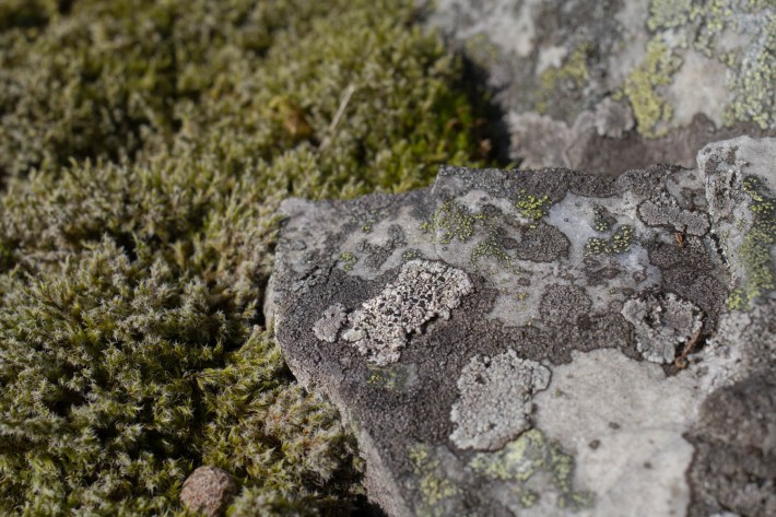 Mosses and lichens on a rock in Glen Esk
