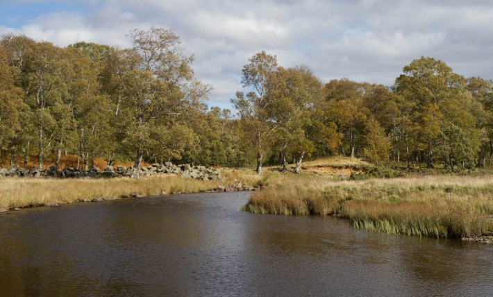 River in Angus Glens, Scotland. Trees on the banks of the river and blue sky