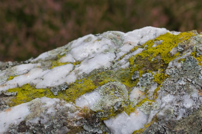 Mosses and lichen on a rock in Glen Esk