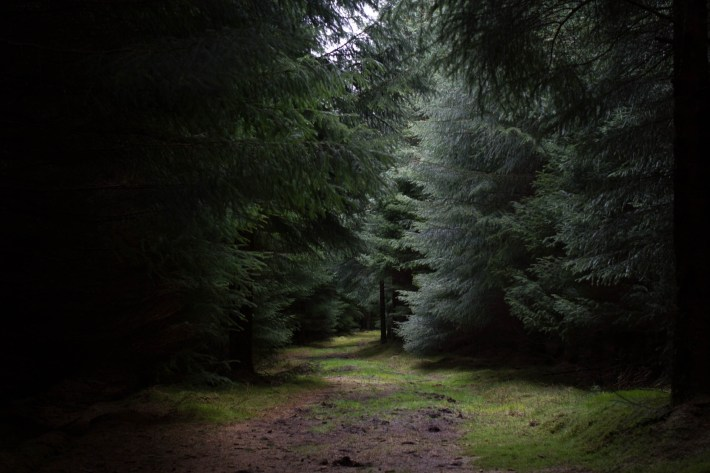 Dark path at Clashindarroch Forest