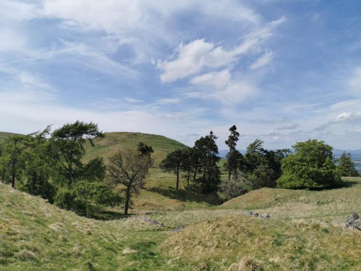 View of trees from Castle law Fort Perthshire