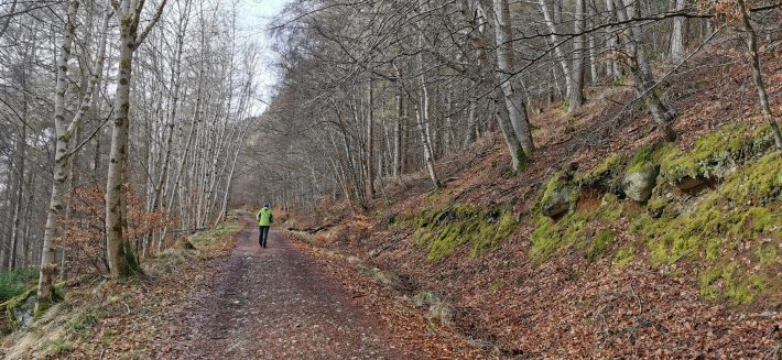 Image of: A male figure walking up a steep woodland track in winter.