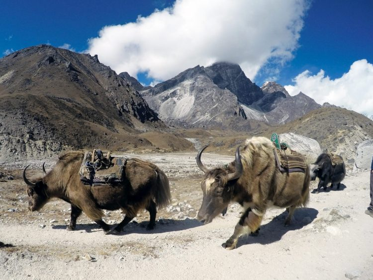 What it's like trekking to Everest Base Camp and Gokyo Lake