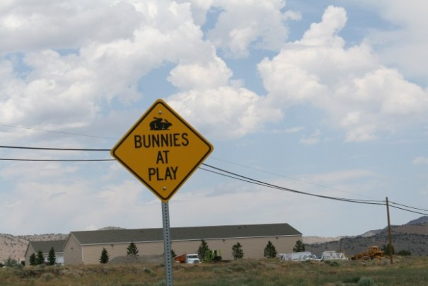 Bunny caution sign.  (We didn't see any bunnies at play)