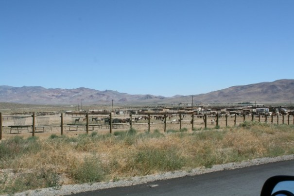 We saw many wild horses that had been rounded up and were up for adoption.