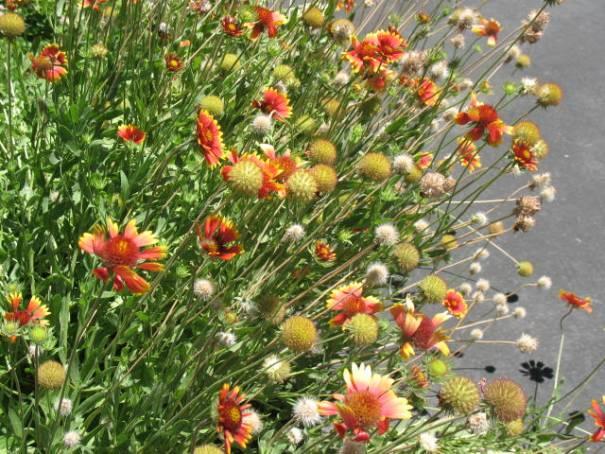 Pretty flowers everywhere.