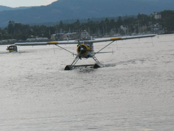 Seaplanes were coming and going throughout dinner.