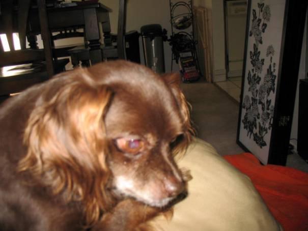 Merlin, Aaron's sweet dog.