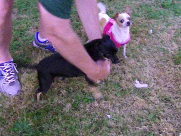 Kiki really likes the boy dog, Riess.