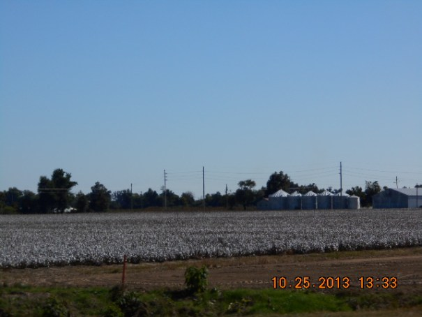 Felt like Tulare, California.  Cotton almost defoliated and ready for machine harvest.