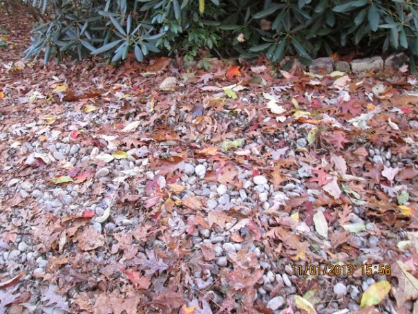 Leaves on the ground, colors.