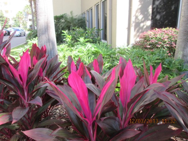 Edie says these plants make her think of the pink flamingos.