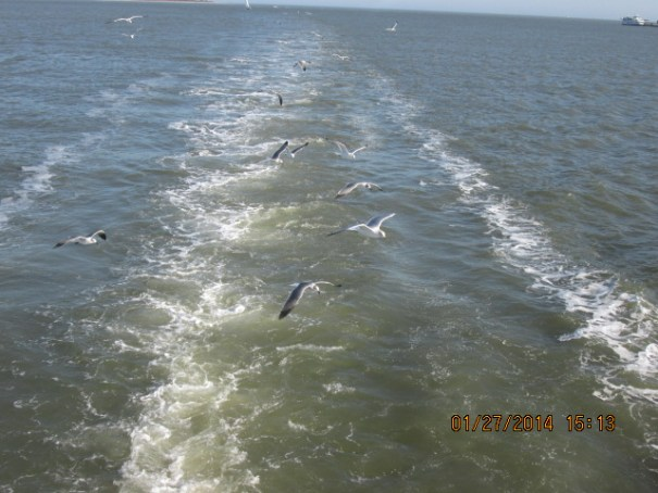 The birds were working our wake.