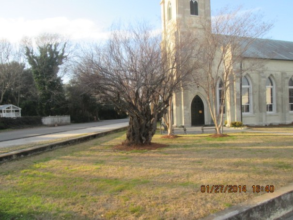 Old tree in front of old church.