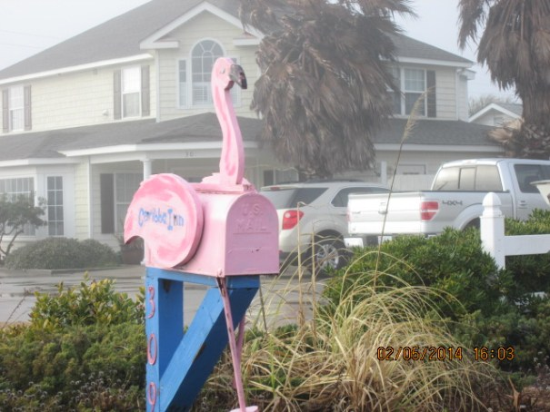 Edie's new favorite mailbox.