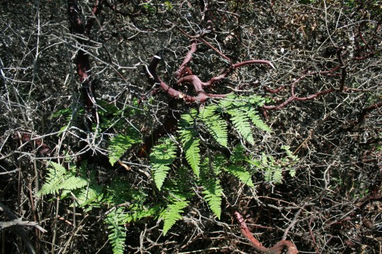 The ferns grow and die by the end of the dry season.  Sure hope we get rain this fall.
