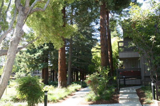 I always forget how pretty the inner courtyard is at his apartment complex, with Redwoods!