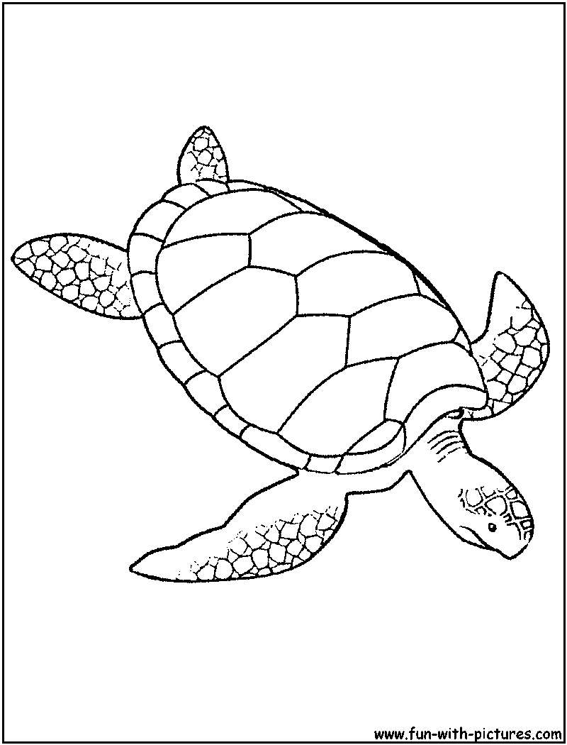 Coloring Page Turtle Cheap Coloring Page Book Turtle Royalty Free