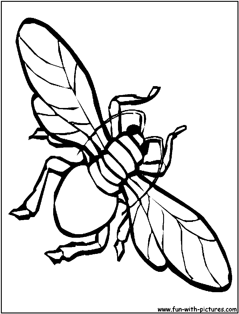 housefly coloring page png