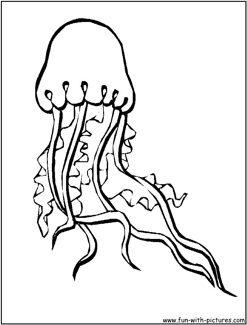 box jellyfish colouring