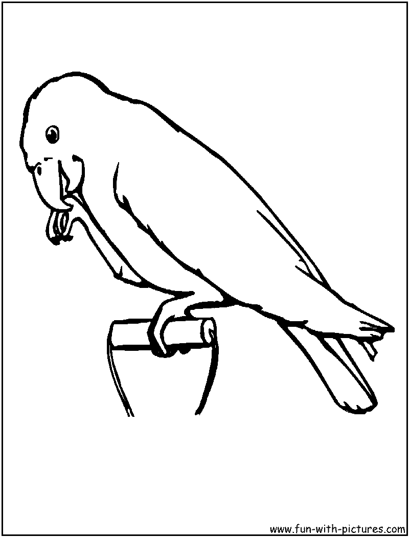 printable crafts coloring pages fun pictures parrot coloring page