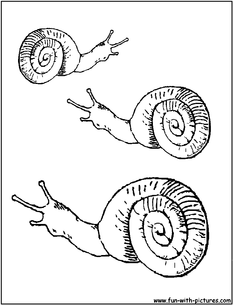 sea snail coloring pages cooloring com